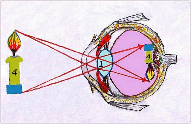 Физика Модель оптической системы глаза Самая безопасная лазерная коррекция зрения