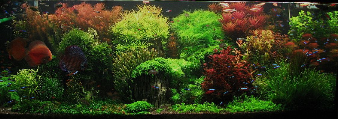 Оформление аквариума растениями фото