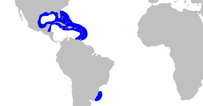 Файл:Caribbean reef shark distmap.png