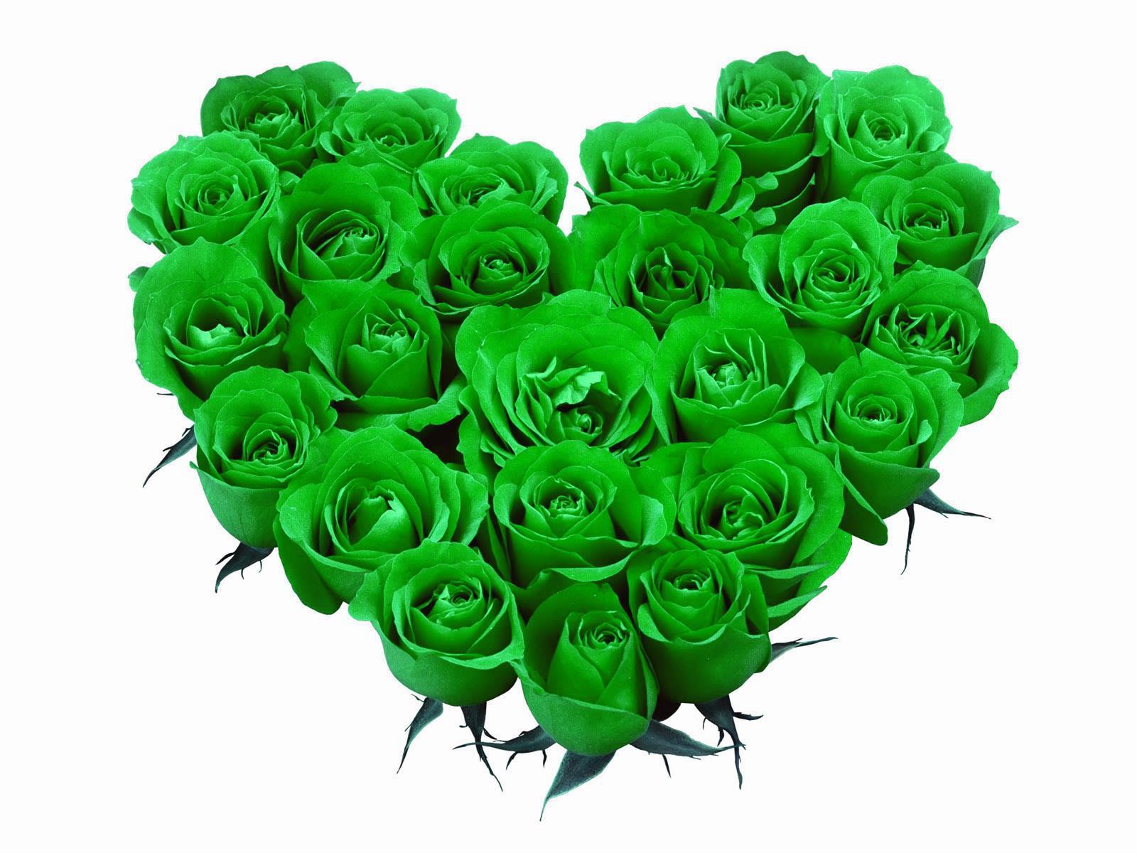 Ромашек столе, букет роз зеленых фото