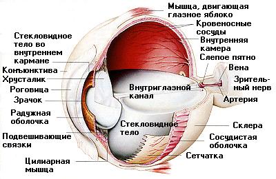 Линзы и диагностика зрения