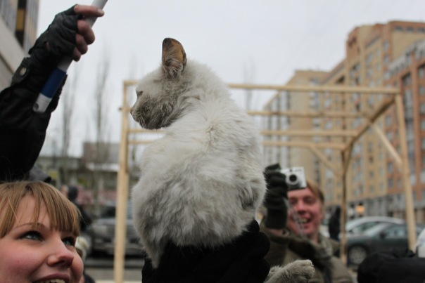 Файл:RM-2010-Novosibirsk-White-Cat-Photo-2.jpg