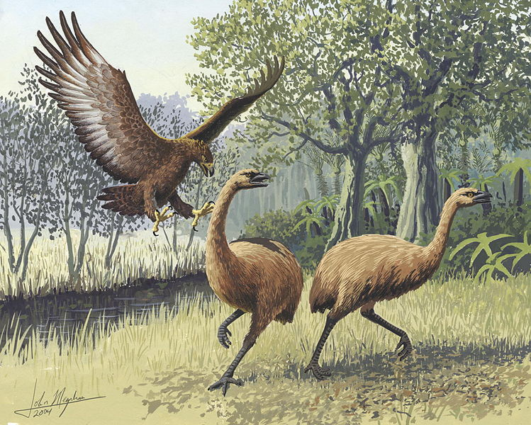 Файл:Giant Haasts eagle attacking New Zealand moa.jpg