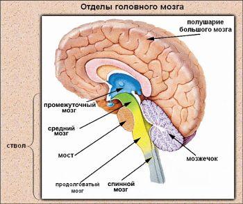 сущность и источники человеческого мозга