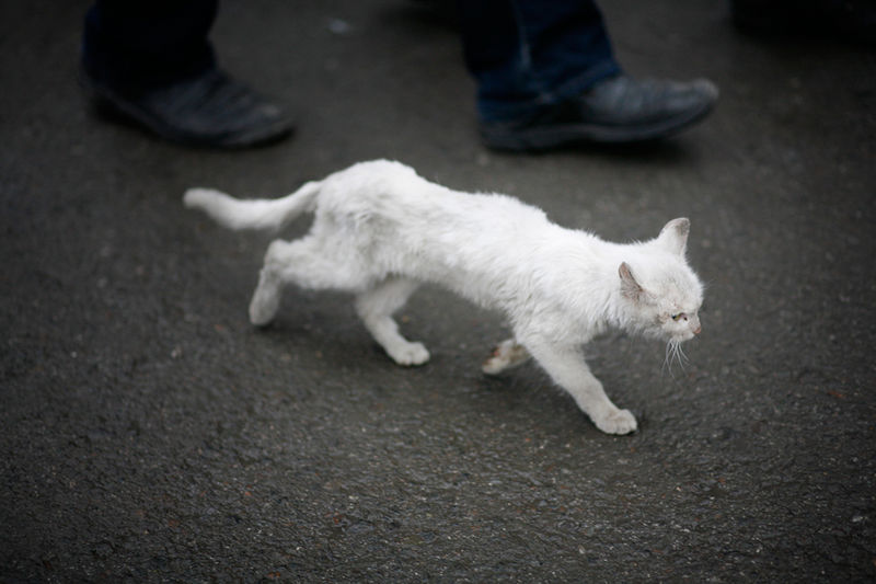 Файл:RM-2010-Novosibirsk-Photo-White-Cat-1.jpg