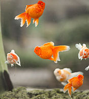 Fish picture.jpg